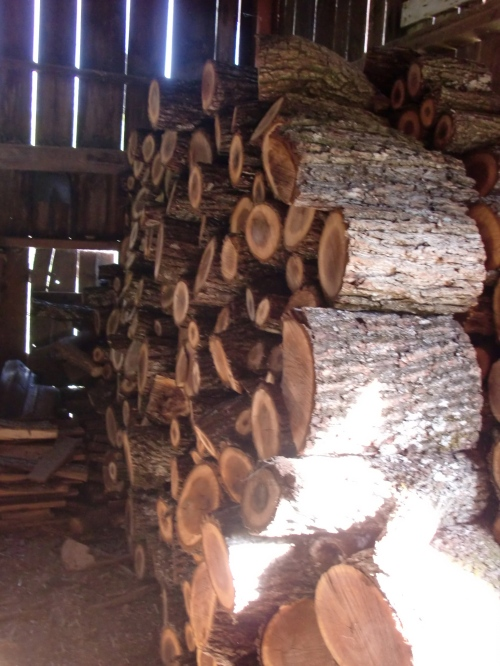Spring light on the winter woodpile.