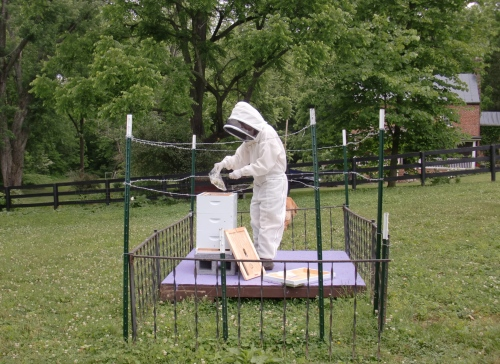 Feeding time at OCCUPY HIVE.