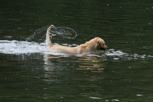 Tail flings, water rings.
