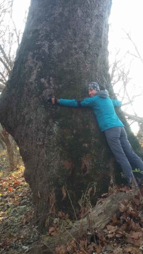 BIG ASS tree!