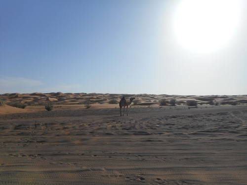 At the desert's edge.