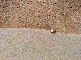hermit crab incognito.
