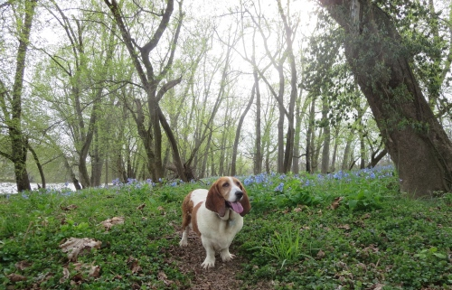 Sophie contemplates life at bluebell level