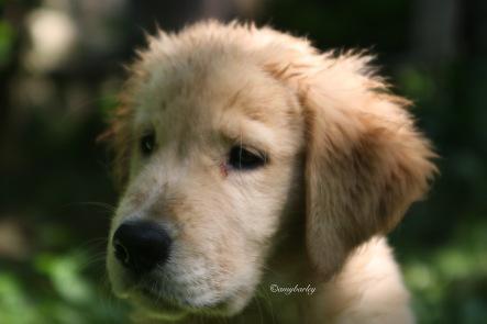 Puppikins, 10 weeks